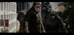 angry apes in rise of the planet of the apes image