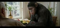 monkey in rise of planet of the apes movie image
